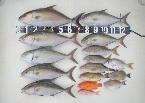 奄美の釣船 款璽丸釣果_c0203337_22301760.jpg