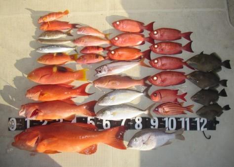 奄美の釣船 款璽丸釣果_c0203337_22305754.jpg