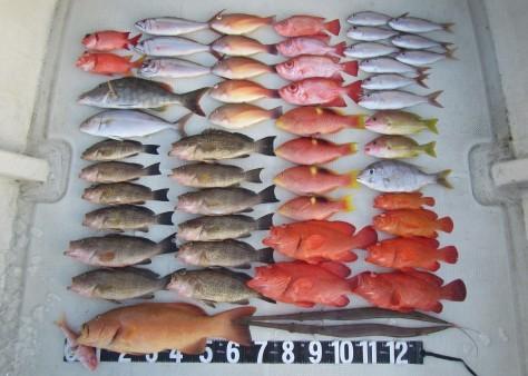 奄美の釣船 款璽丸釣果_c0203337_22313670.jpg