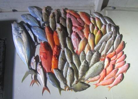 奄美の釣船 款璽丸釣果_c0203337_22325429.jpg
