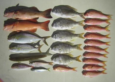 奄美の釣船 款璽丸釣果_c0203337_22342145.jpg