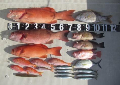 奄美の釣船 款璽丸釣果_c0203337_23041354.jpg