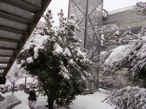 長岡サポステ雪情報_c0204368_09592726.jpg