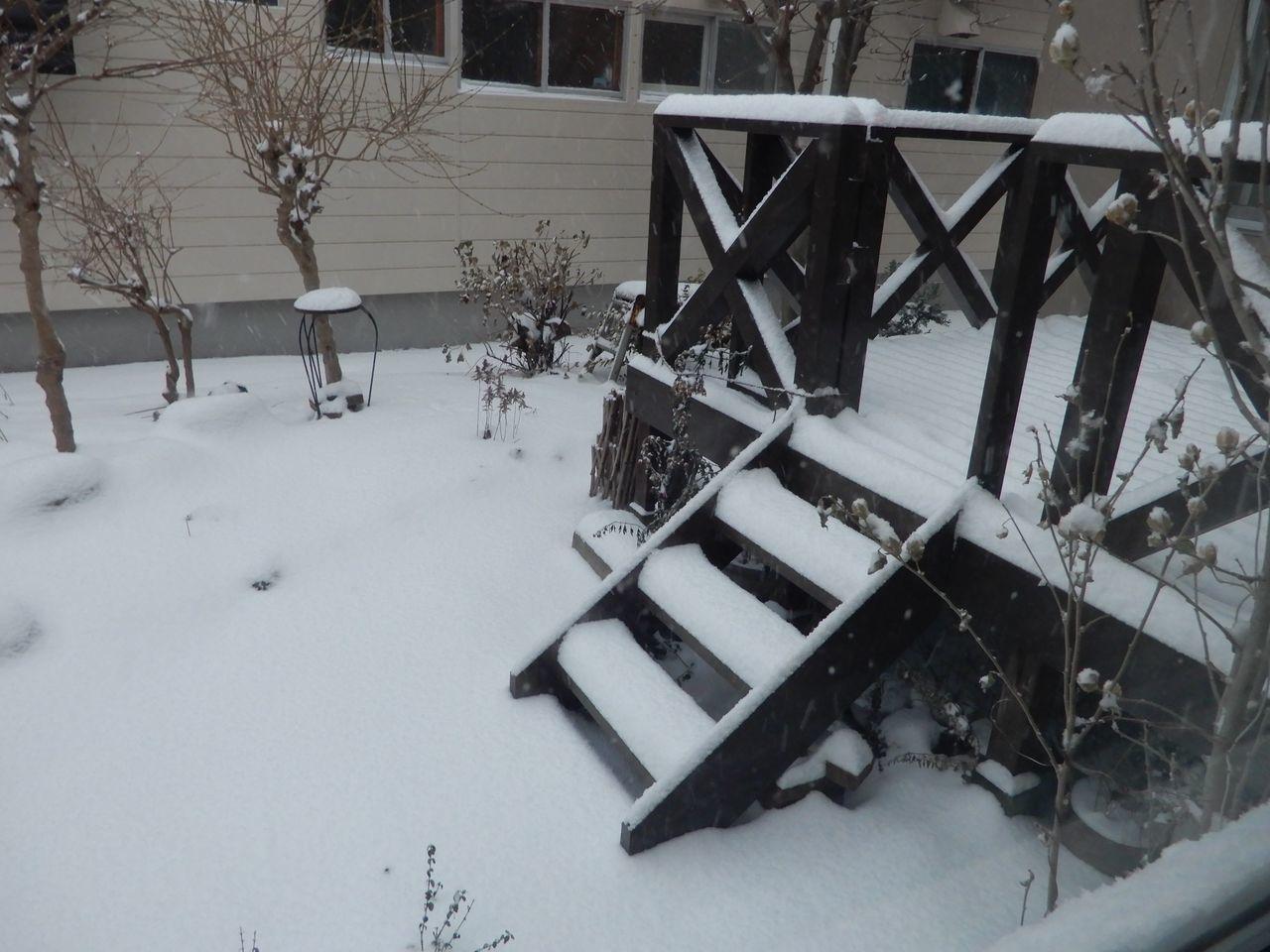 「ドカ雪」ではないものの「根雪」になりそうな積雪_c0025115_21590386.jpg