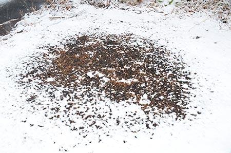 作業小屋の焼け跡に円形の雪融け_e0005362_06212635.jpg