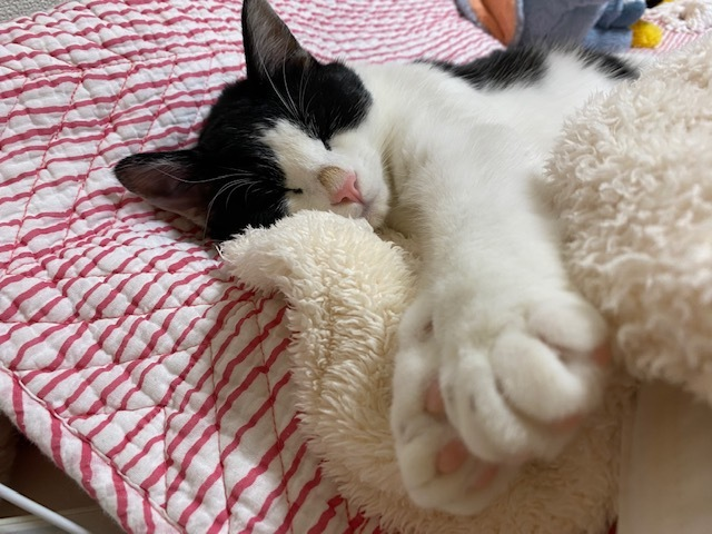 子猫のそらた➆_e0367571_22133750.jpg