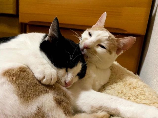 子猫のそらた➆_e0367571_22220482.jpg