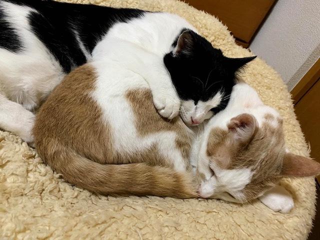 子猫のそらた➆_e0367571_22222367.jpg
