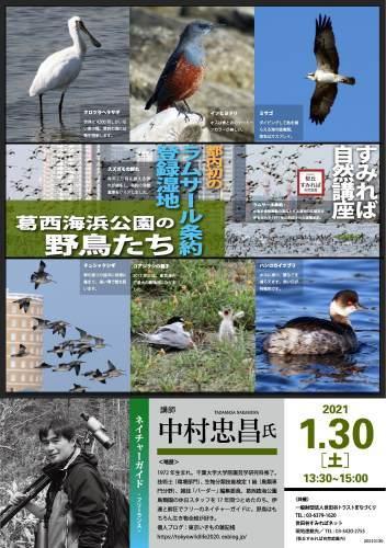 1/30開催 自然講座「葛西海浜公園の野鳥たち」_b0049307_11502799.jpg