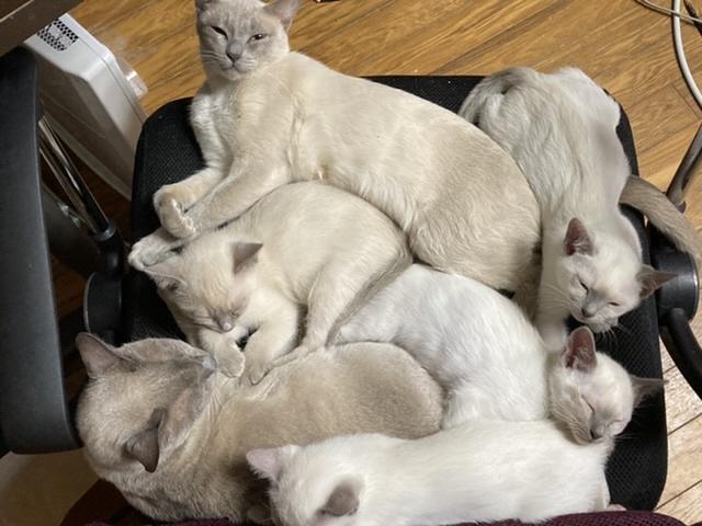 子猫ワクチン終了_a0090729_20364676.jpeg