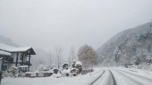 白菜を雪の中から収穫。_c0300035_14220198.jpg