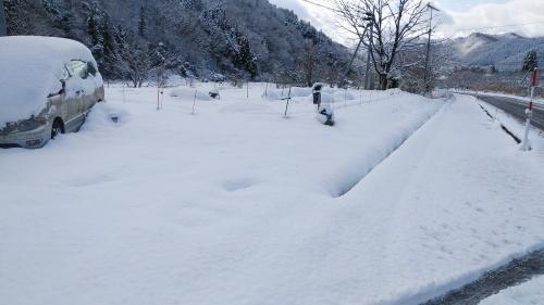 白菜を雪の中から収穫。_c0300035_14281577.jpg