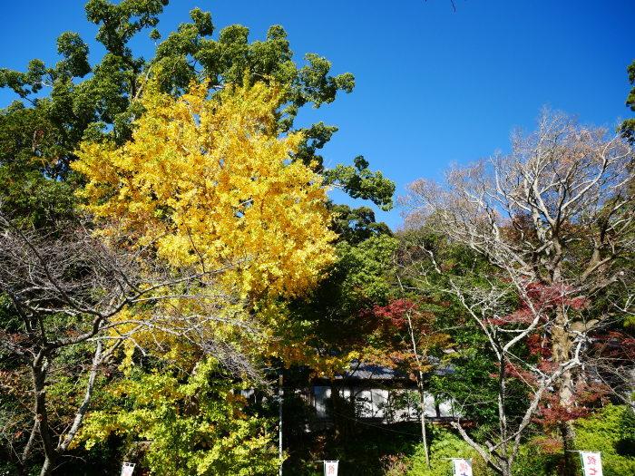 小野田の里  2020-12-18 00:00_b0093754_22263888.jpg