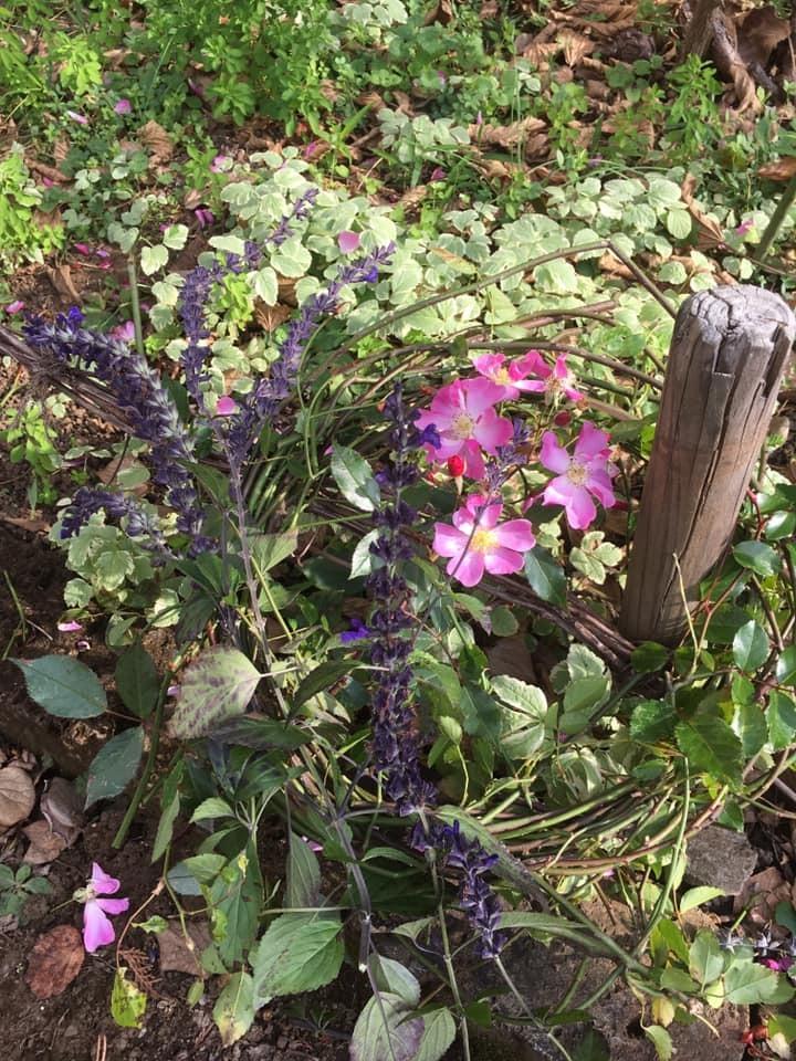 バラと野の花のリース_a0094959_00163876.jpg