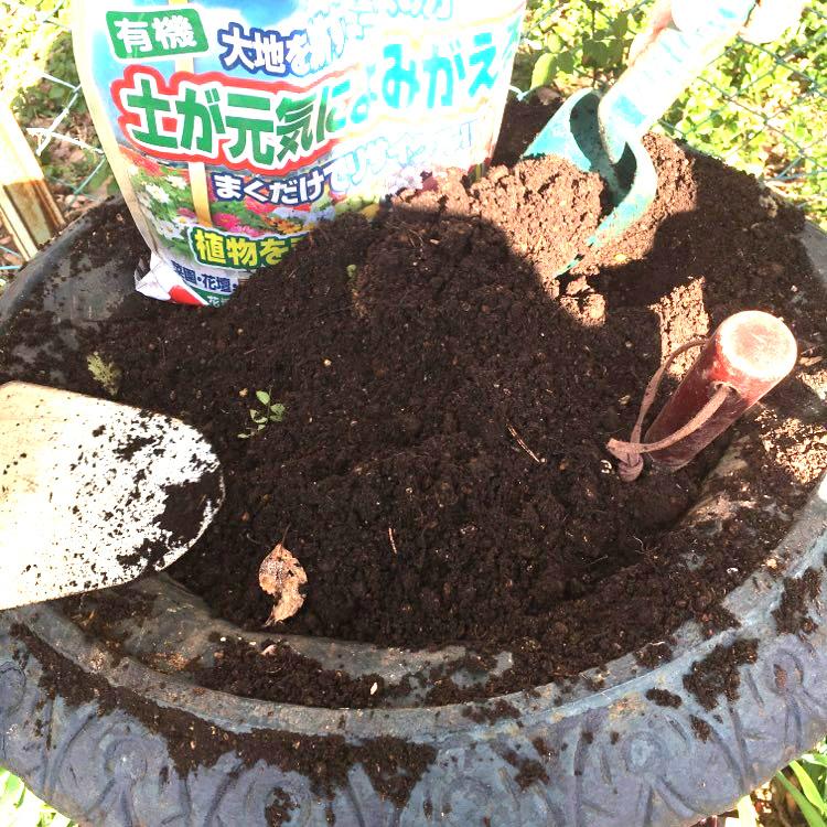 大鉢の植栽_a0094959_00420627.jpg