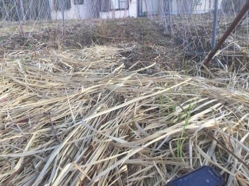 小麦種まき 2020_e0181260_05091266.jpeg