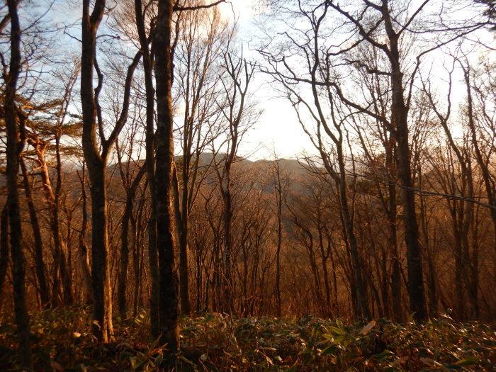 地元の里山:弥太郎山 ~ 2020年11月21日_f0170180_17463979.jpg