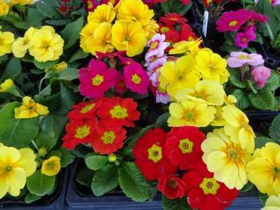 ガーデンふ頭総合案内所前花壇の植替えR2.12.14_d0338682_09280271.jpg