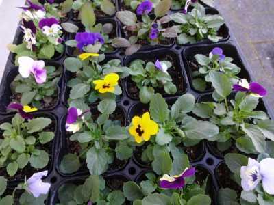 ガーデンふ頭総合案内所前花壇の植替えR2.12.14_d0338682_09293368.jpg
