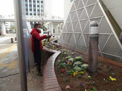 ガーデンふ頭総合案内所前花壇の植替えR2.12.14_d0338682_09313009.jpg