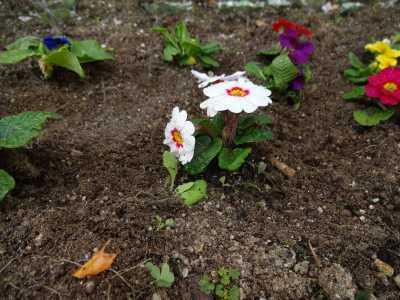 ガーデンふ頭総合案内所前花壇の植替えR2.12.14_d0338682_09320371.jpg