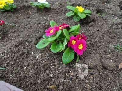 ガーデンふ頭総合案内所前花壇の植替えR2.12.14_d0338682_09321280.jpg