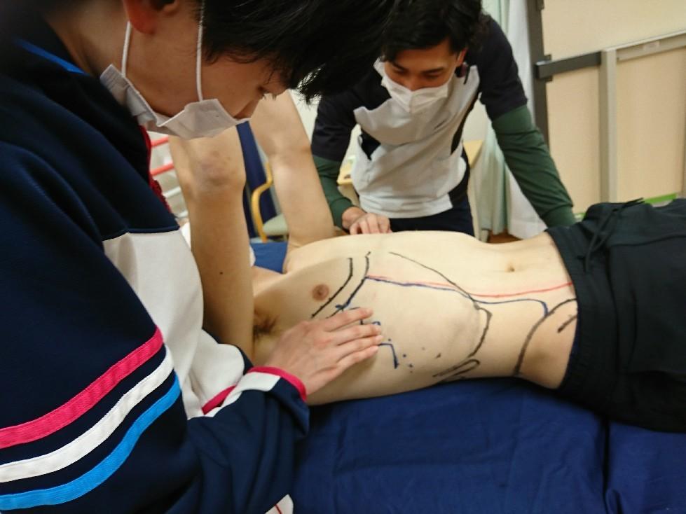 第186回TOC体表解剖勉強会|内・外腹斜筋、腹横筋筋の触察_b0329026_22455832.jpg