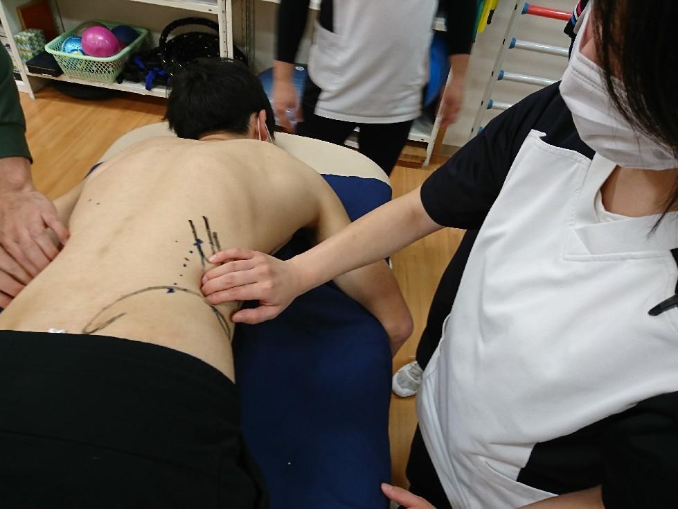 第186回TOC体表解剖勉強会|内・外腹斜筋、腹横筋筋の触察_b0329026_22462809.jpg
