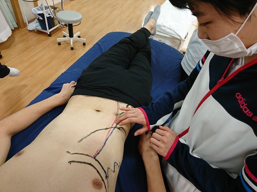 第186回TOC体表解剖勉強会|内・外腹斜筋、腹横筋筋の触察_b0329026_22462847.jpg