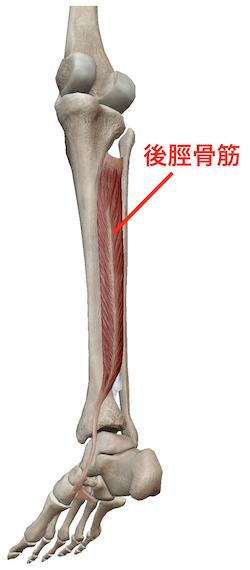 階段を降りにくいときには、足首のバランスをチェックしてみましょう 〜ある日の施術より〜_e0073240_06510327.jpg