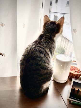 Happy Caturday 。。#29_d0358793_08273120.jpg