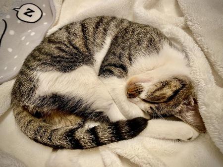 Happy Caturday 。。#29_d0358793_09040116.jpeg