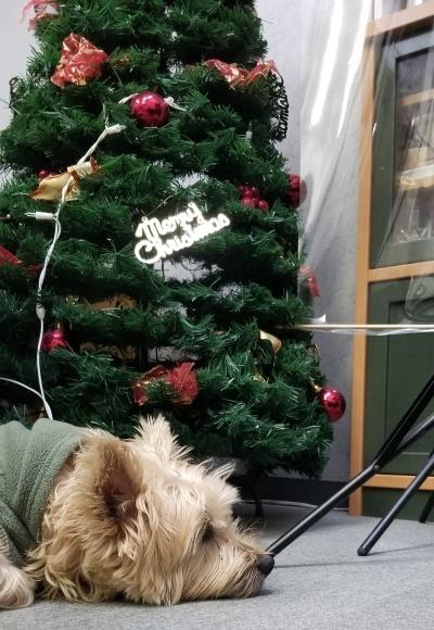 クリスマスだワン!!_c0346934_20253278.jpg
