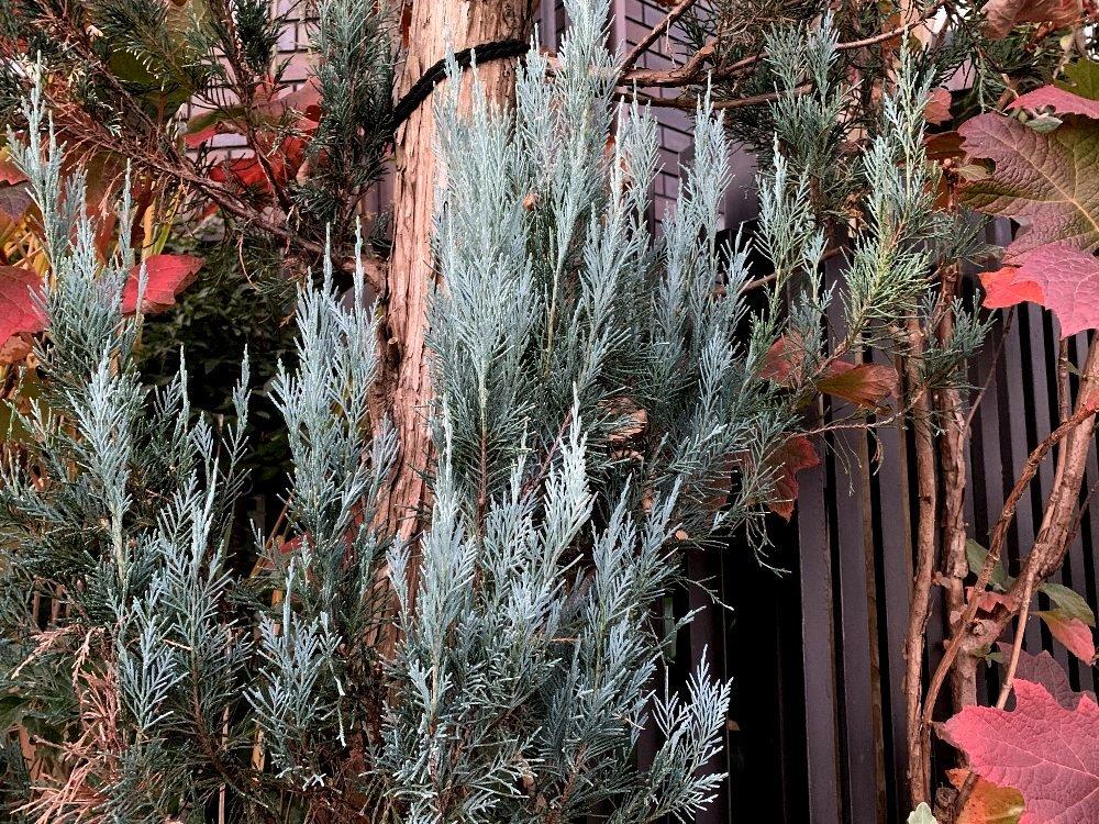 ☆冷たい空気と木々・深呼吸の散歩道☆_c0092953_12592185.jpg
