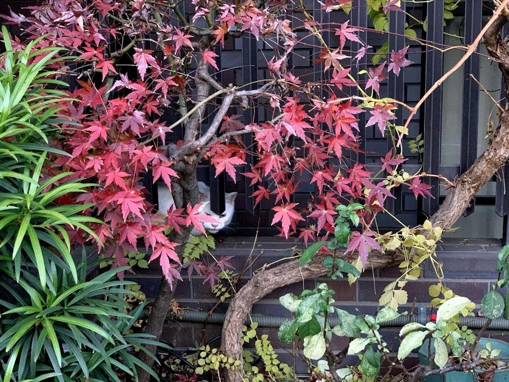 ☆冷たい空気と木々・深呼吸の散歩道☆_c0092953_12593602.jpg
