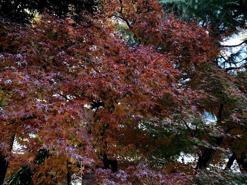 ☆冷たい空気と木々・深呼吸の散歩道☆_c0092953_13002454.jpg