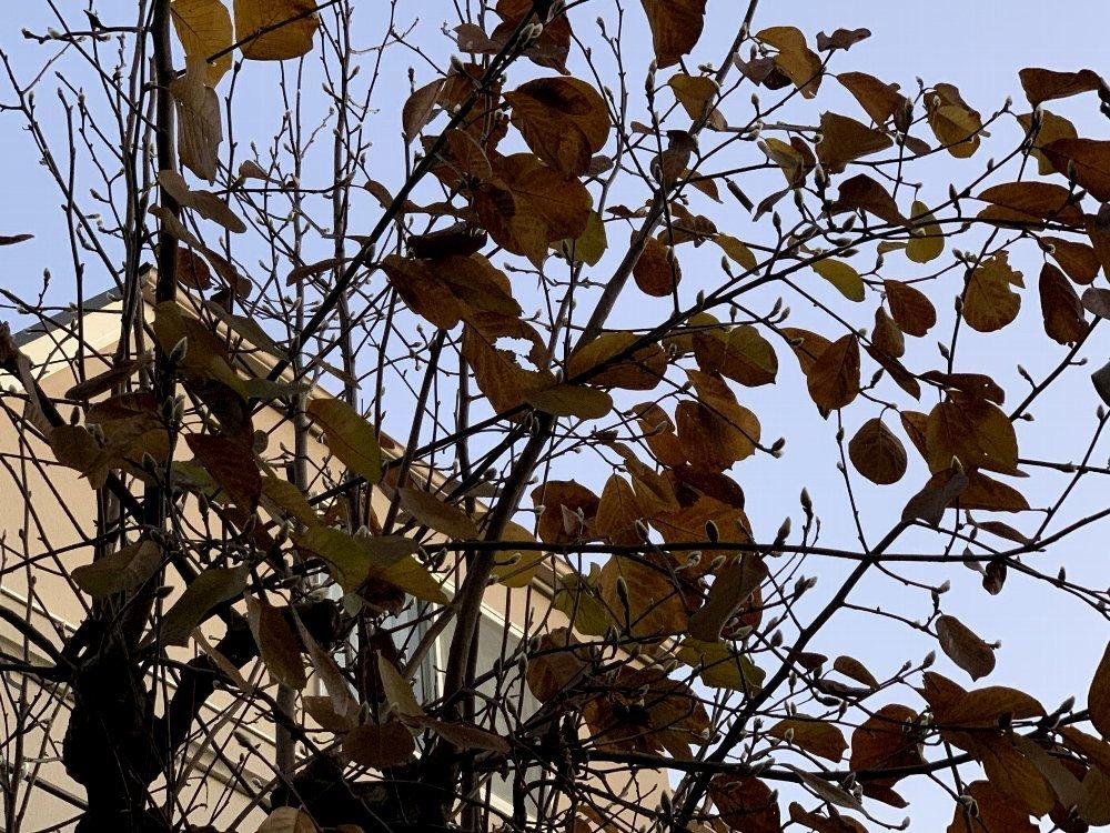 ☆冷たい空気と木々・深呼吸の散歩道☆_c0092953_13003465.jpg