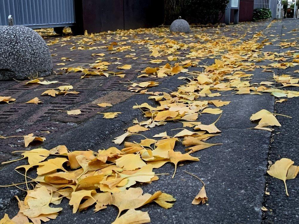 ☆冷たい空気と木々・深呼吸の散歩道☆_c0092953_13004436.jpg