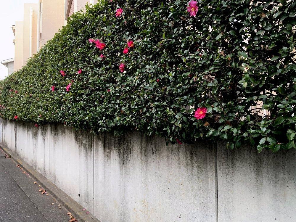 ☆冷たい空気と木々・深呼吸の散歩道☆_c0092953_13010822.jpg