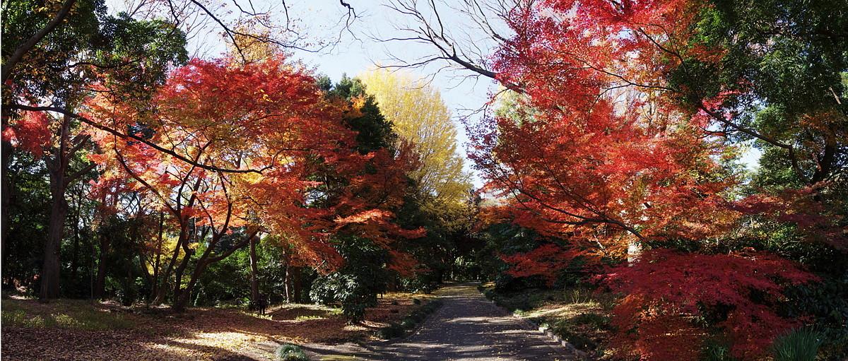 2020.12.15 東京・新宿御苑 紅葉   2020.12.21 (記)_a0181059_16123736.jpg