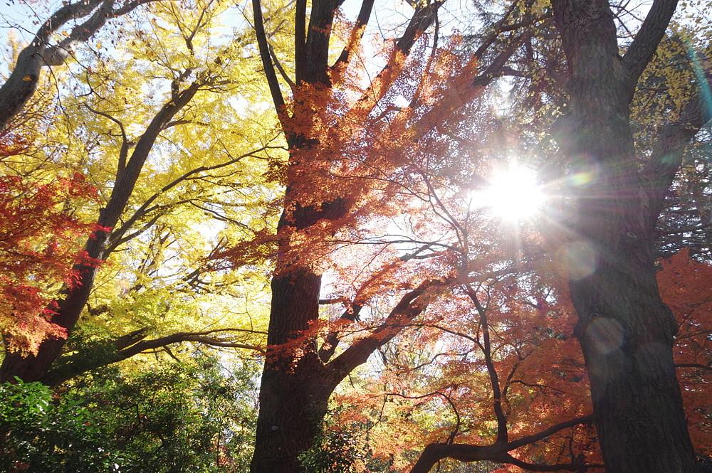 2020.12.15 東京・新宿御苑 紅葉   2020.12.21 (記)_a0181059_16511208.jpg