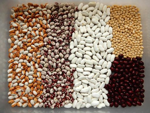 豆の収穫 2020年_d0366590_10320313.jpg