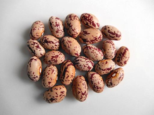 豆の収穫 2020年_d0366590_13522279.jpg