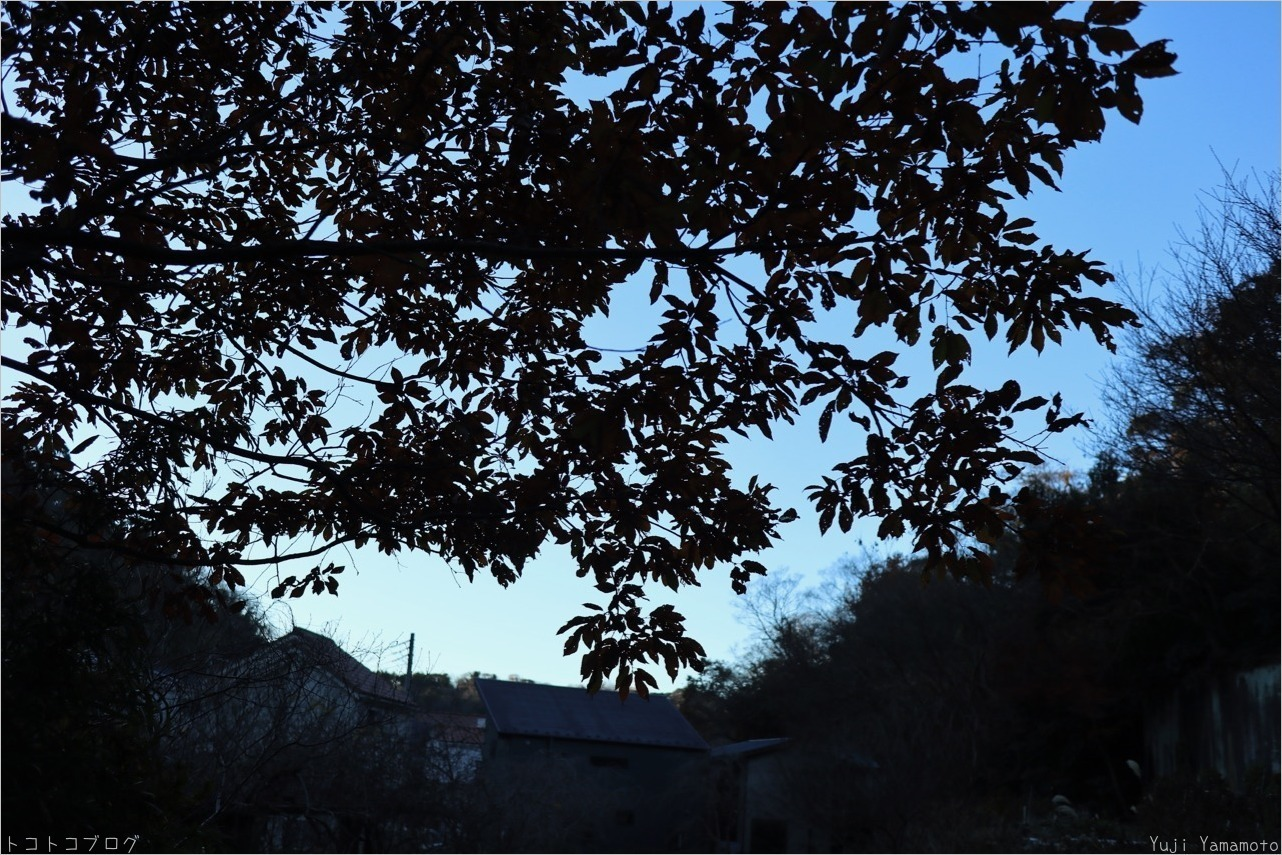 冬至_c0202706_15165932.jpg