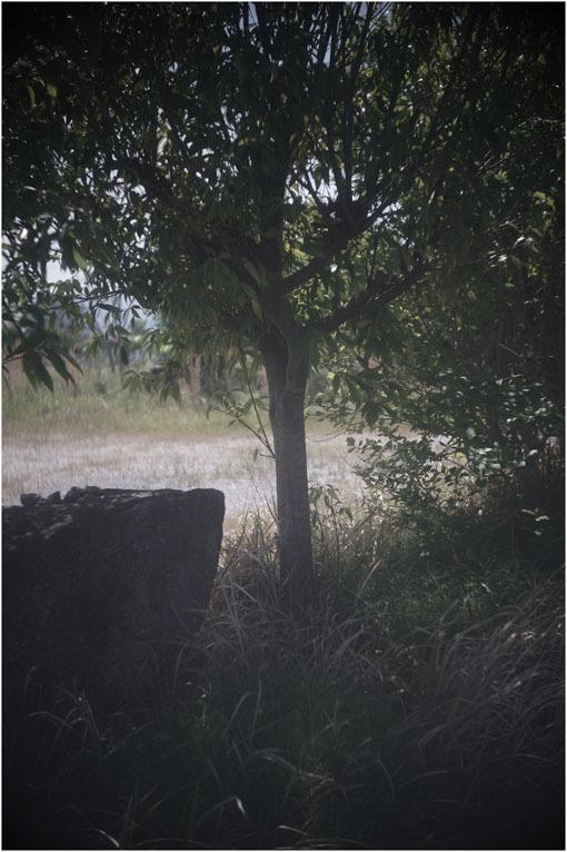 872.02 (2020年5月14日パンタッカー50mmF2.3奈良白毫寺町でロボグラフィ賛歌)2 歴史の転倒_c0168172_01044394.jpg