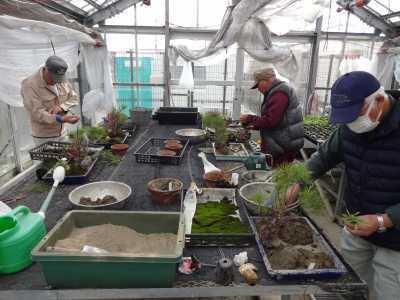 温室通信 正月用盆栽制作の様子_d0338682_15453370.jpg