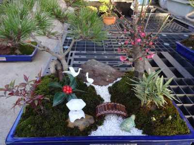 温室通信 正月用盆栽制作の様子_d0338682_15472352.jpg