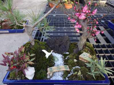 温室通信 正月用盆栽制作の様子_d0338682_15473492.jpg