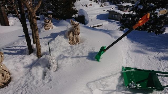 雪だるま作ってみました♪_c0320302_14181448.jpg