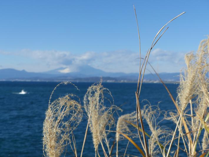 江の島散策2020 12月Part2_f0296312_11461919.jpg